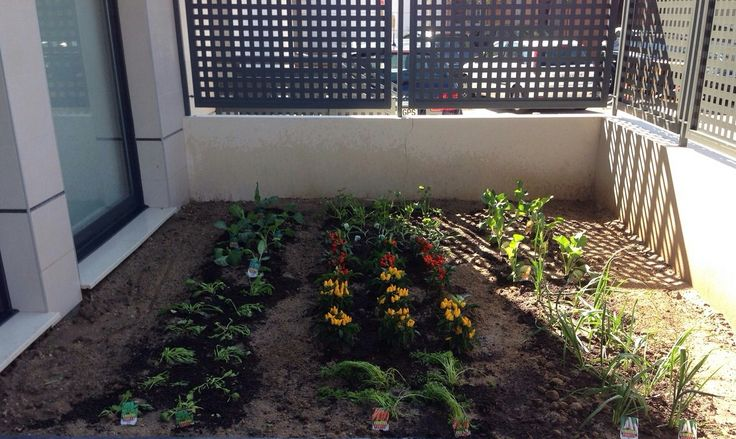 En el exterior de la cocina, hay un huerto donde crecen las verduras.