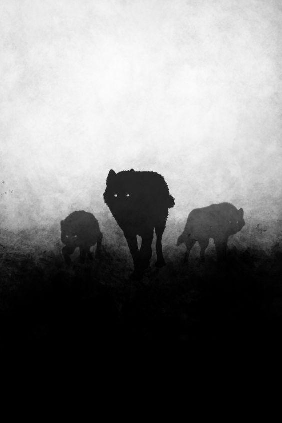 Wolf pack night darkness