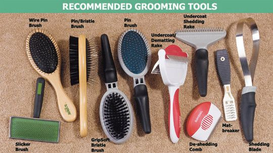 Grooming your dog regularly helps to keep your home clean.  Just make sure to purchase the correct tools. Her's how.