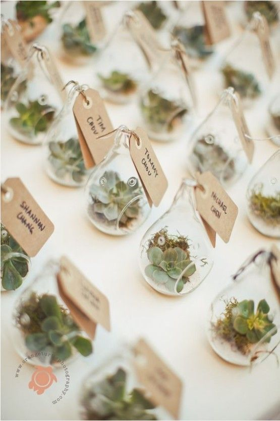 Give your wedding guests a living succulent terrarium or use them as place cards.
