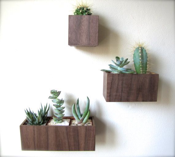 """Set of THREE Hanging Wall Plant Holders in WALNUT wood, includes 3""""x3""""x3"""", 5""""x3""""x3"""", and 8""""x3""""x3"""" sizes, air plants available for added cost..."""