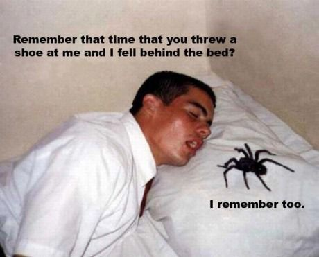 hahahahaMissionaries, Beds, God, Spiders, Funny Cat, Funny Pictures, Funnypictures, Funny Stuff, Funny Memes