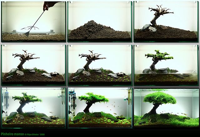 Aquascaping, there is a website for this if your interested too.