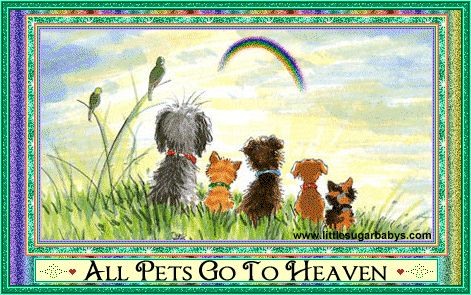 All Pets Cats Dogs Guinea Pigs Mice Rabbits Birds