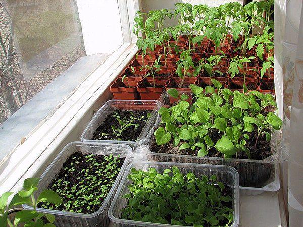 Очень полезная информация для любителей-огородников. Возможно кто-то и не знаеткогда и что сажать на рассаду, тогда ознакомьтесь с этой информацией. Ещё у Вас есть время кое-что посадить .  Рассчитат…