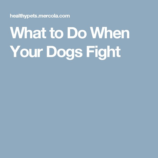 What to Do When Your Dogs Fight