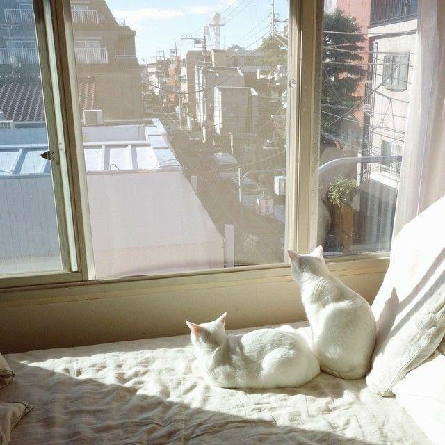 Aesthetic Cream Aesthetic Creme Fotos De Animais Fofinhos Animais Bebes Mais Fofos Condominio De Gato