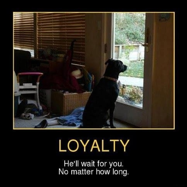 So Very True...: The Doors, Animal Shelters, Dogs, Bestfriends, Pet, Man Best Friends, Front Doors, Loyalty, People