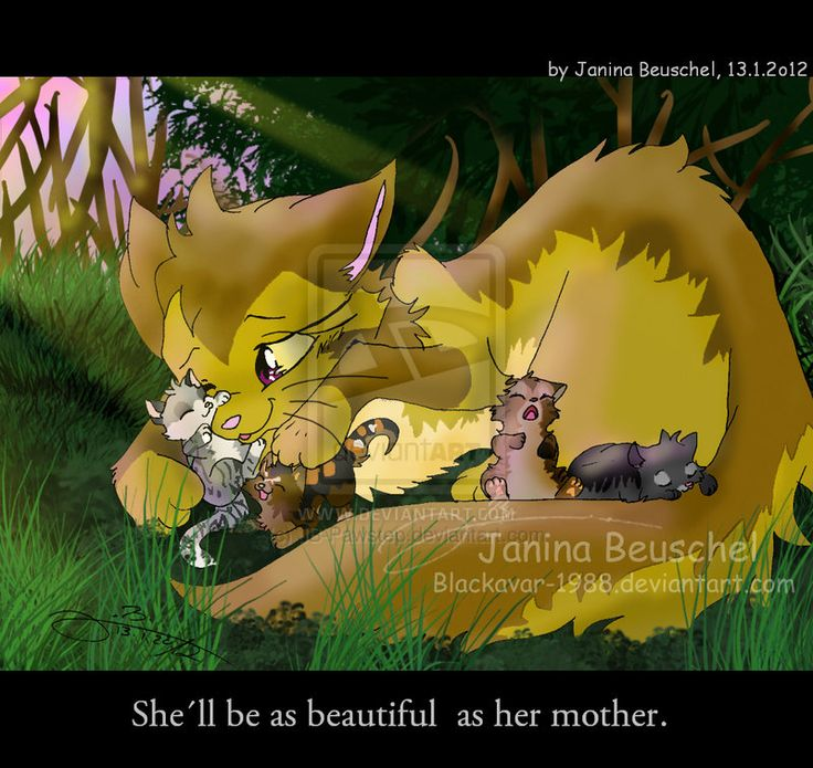 Warriors Forest Of Secrets Lexile: 134 Best Images About Warrior Cats Rock! On Pinterest