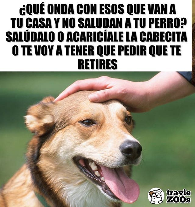 Me Parece Una Terrible Falta De Respeto Saludo Perro Dog Mascota Visitas Perros Frases Perros Amor De Perro