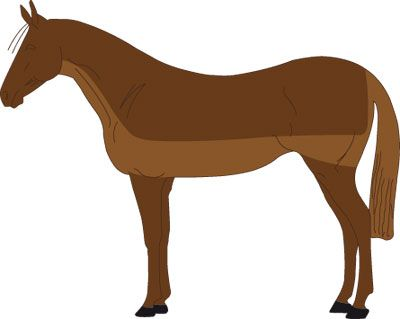 http://www.horze.eu/types-of-horse-clip/types-of-horse-clip.html