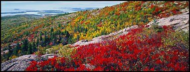 Autumn landscape with brightly colors shrubs and trees. Acadia National Park (Panoramic color)