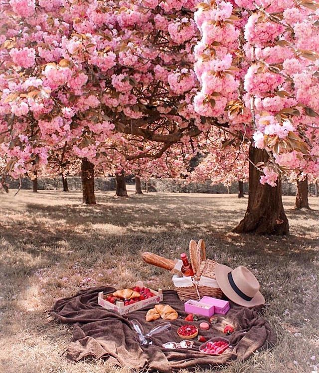 How Beautiful Of These Cherry Blossom Trees Have A Great Sunday Everyone Repost Fashionzine Romantic Picnics Picnic In Paris Picnic Inspiration
