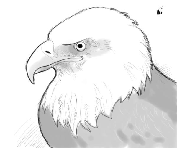 https://i.pinimg.com/736x/79/24/48/79244805e9ec4d7174528d5bba12dbc4--eagle-drawing-bald-eagle.jpg Eagle Drawing Easy