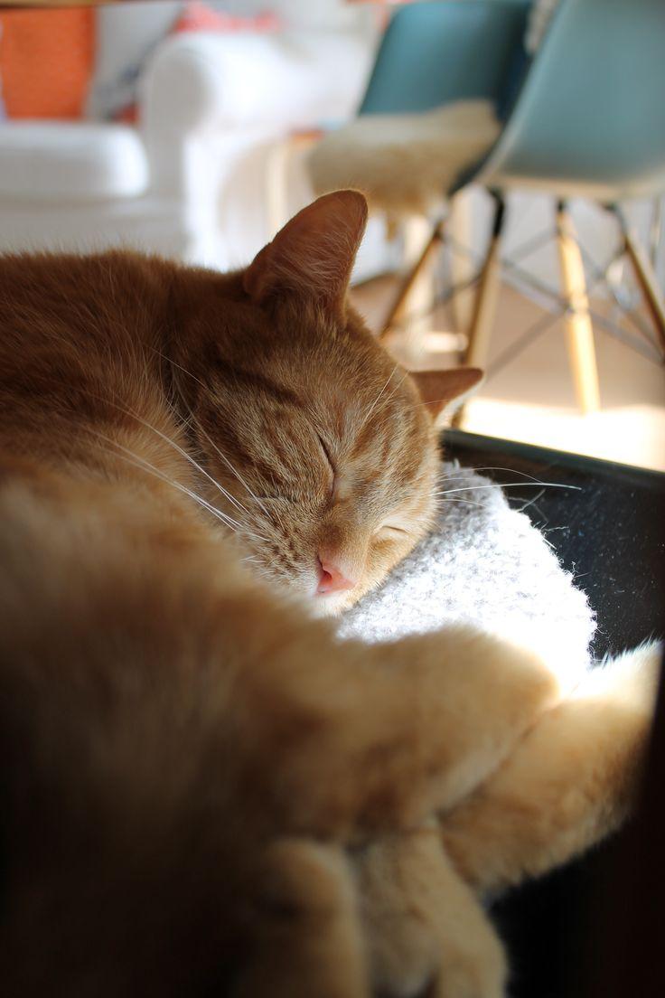 ginger cat meets Arne & Eames (Ginger-Bee)