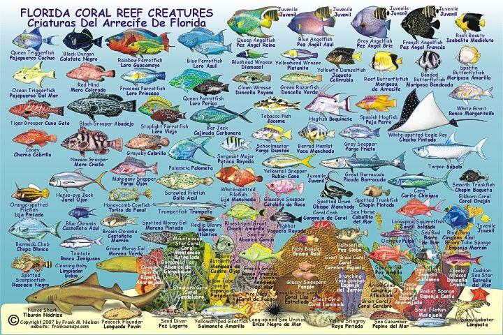 Florida fish facebook anna maria island beach life www for Florida reef fish
