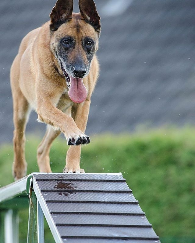 Training Tip When Your Dog Successfully Completes A Task Be Quick