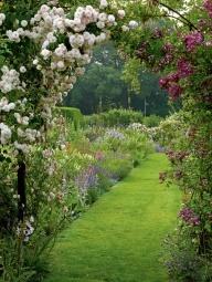 Beautiful rose arbor in Spring.