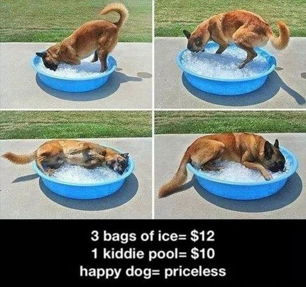 funny pictures of dogs. @deanna hughes hughes Sillaman I think Lloyd needs this all summer!
