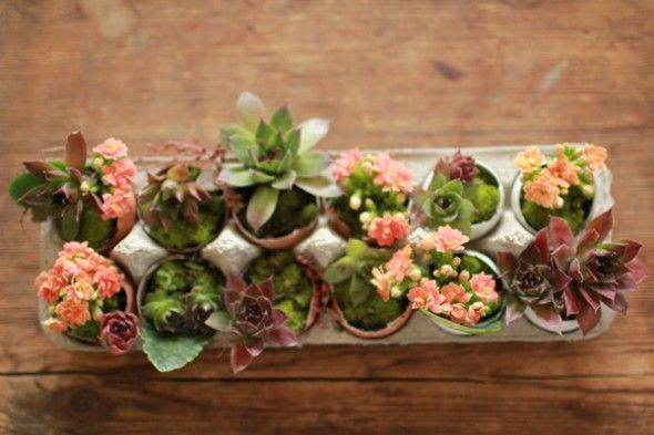 so beautiful!!! these are planted in egg shells and sitting comfortably in an egg carton. cute!