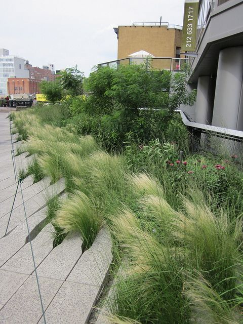 The High Line in NYC, abandoned train line, now garden designed by the Dutch plantsman Piet Oudolf. Mexican feather grass (stipa tenuissima) is probably my favorite plant.  It's beautiful and graceful and  there is constant movement as it responds to every little breeze.