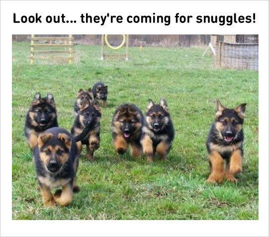 snuggles funny dog memes #funnydogs