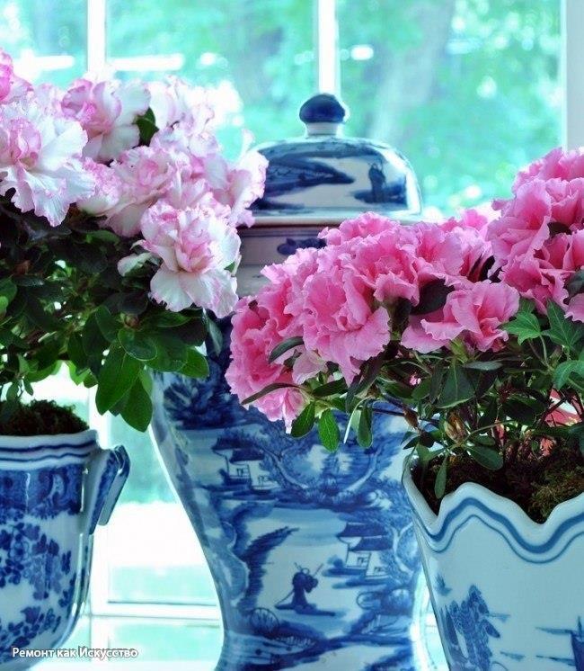 Скажите «нет»: какие комнатные растения нельзя держать в доме?  Немного найдется людей, у которых нет в квартире хотя бы одного маленького горшочка с цветами. Комнатные растения способны удачно дополнить любой стиль, даже если вы являетесь приверженцем минимализма или строгого хай-тека. При покупке растений вам вряд ли кто-то расскажет о «подводных камнях», а между тем они могут в буквальном смысле отравлять вашу жизнь! Квартблог составил список растений, которым стоит сказать категорическое…