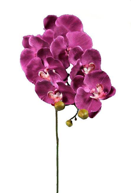 #phalenopsis #flower  #decoration for #home #homeliving by #ZAROS www.zarossa.gr