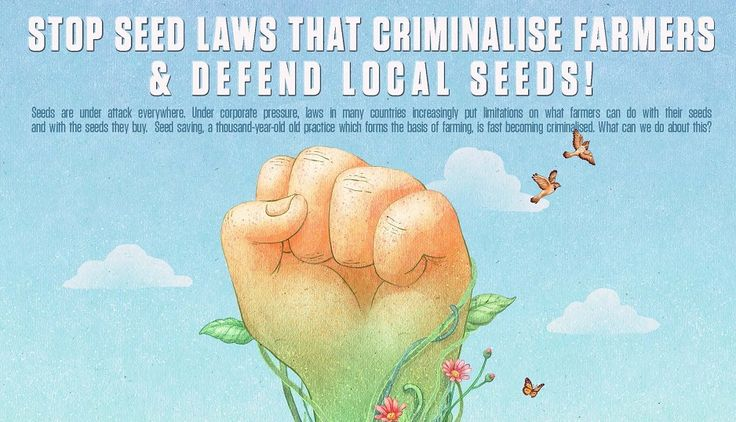 Seeds are under attack everywhere. Under corporate pressure, laws in many countries increasingly put limitations on what farmers can do with their seeds and with the seeds they buy. Seed saving, a thousand-year-old practice which forms the basis of farming, is fast becoming criminalised. What can we do about this?