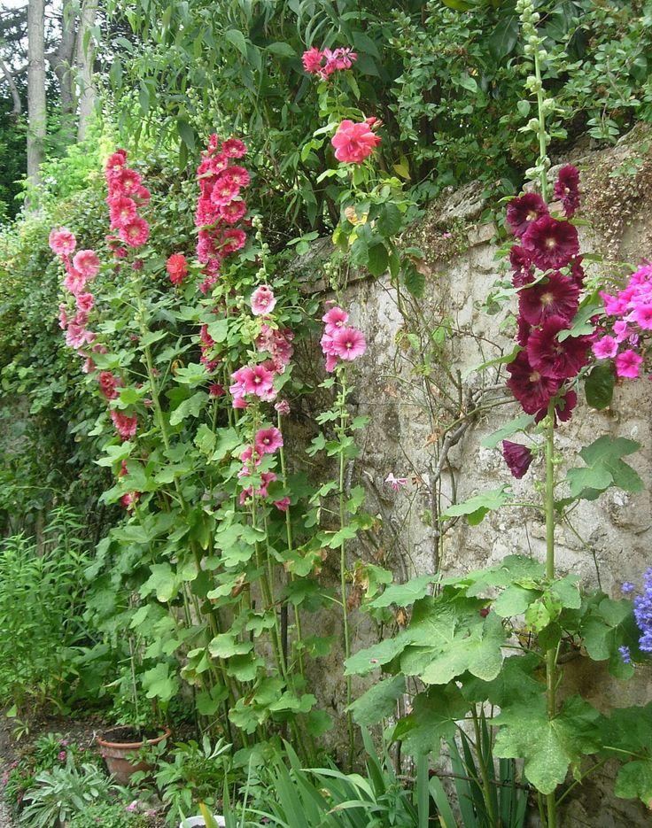 roses tr mi res au jardin pinterest rose photos roses and photos. Black Bedroom Furniture Sets. Home Design Ideas
