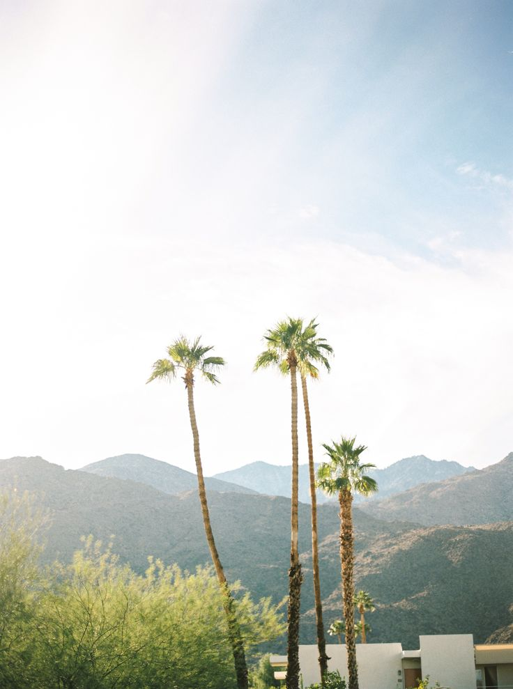 Ace Hotel // Palm Springs a special place. #portra400 #wanderings #bubblerock