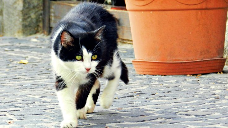 The Haunter  #haunter #cat #cute #animal #black&white