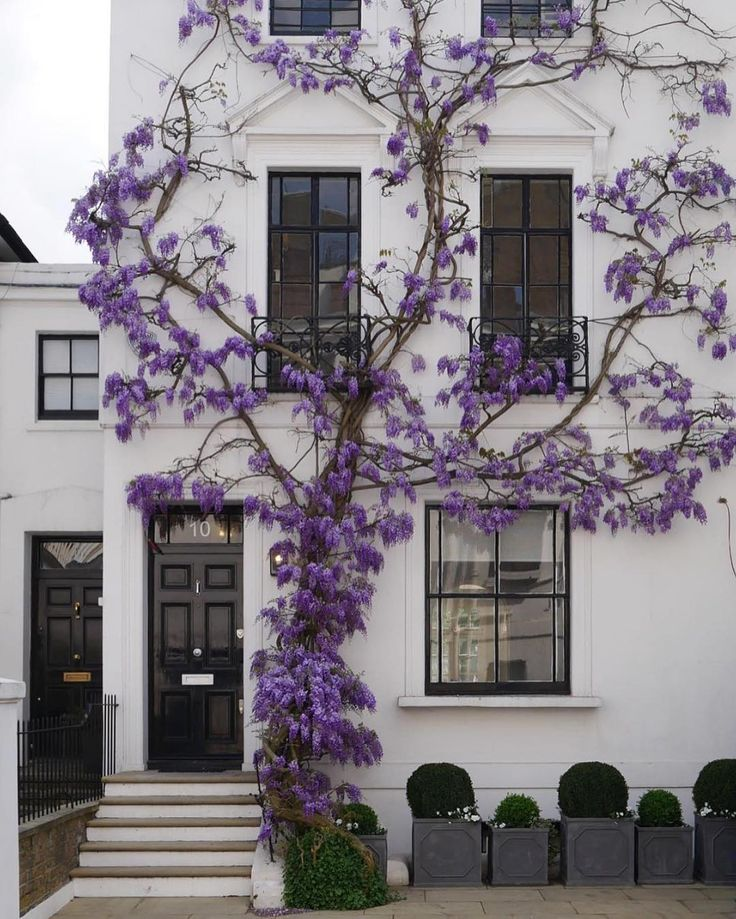 White apartment building with black doors and purple vines climbing up