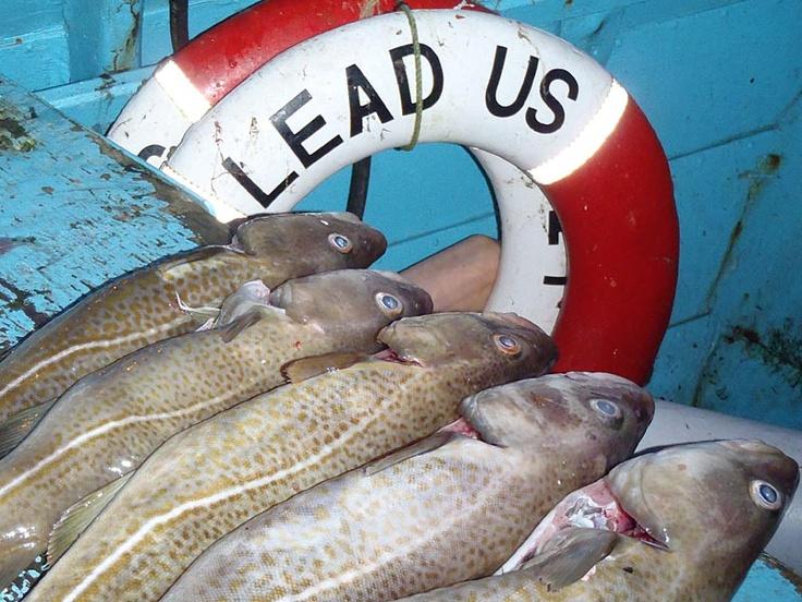 Snapper's Fladen '13…Part Two | Fladen Fishing