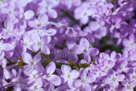 Lila virágok — Stock Kép #47587459