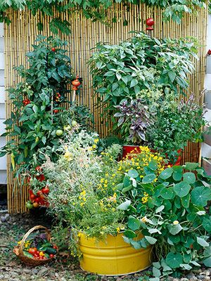 Growing strong in unexpected containers.Gardens Ideas, Container Gardens, Veggie Gardens, Growing Vegetables, Vegetables Gardens, Small Spaces, Veggies Gardens, Container Gardening, Vegetable Garden