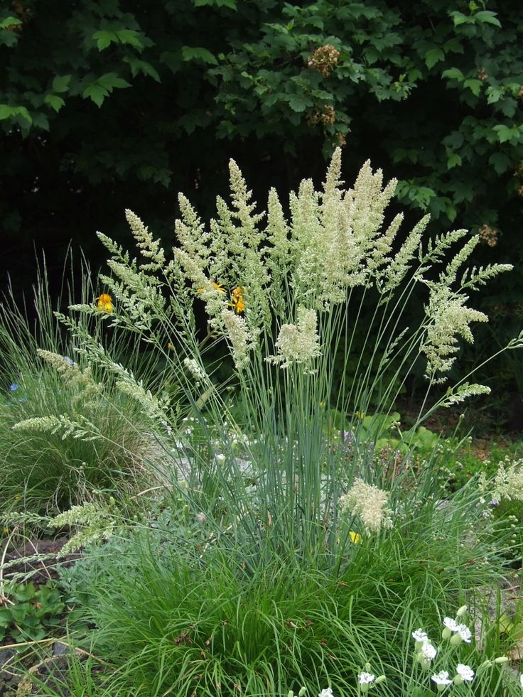 17 best images about grass on pinterest gardens sun and