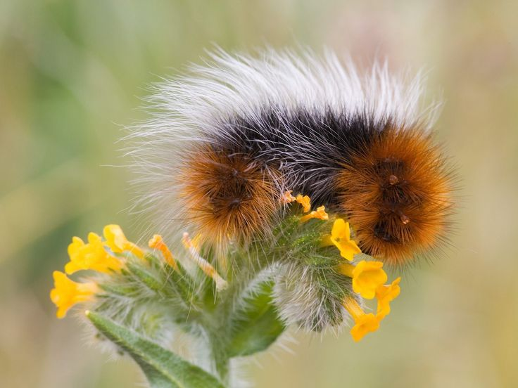 caterpillar on flower
