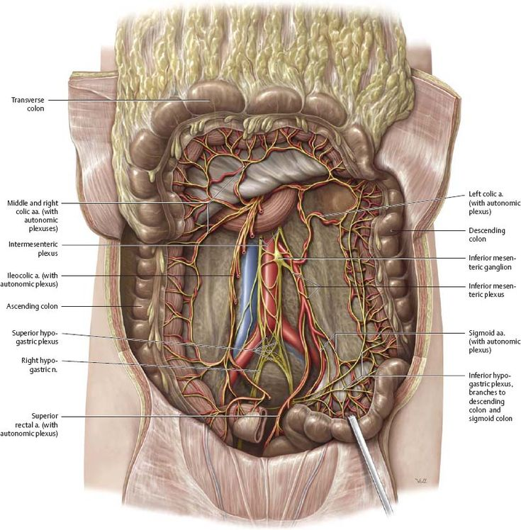 31 Best Spinal L1 To L5 Images On Pinterest Gross Anatomy Medical