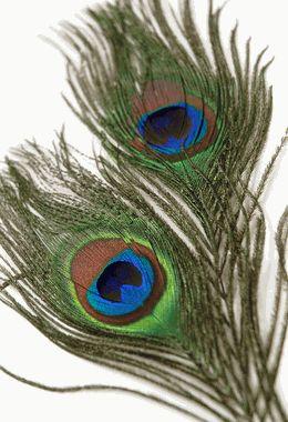 Peacock Feathers  Eye Feathers 6-8 (pkg of 2) $2.99 pkg/ 10 pkgs $1.39 pkg