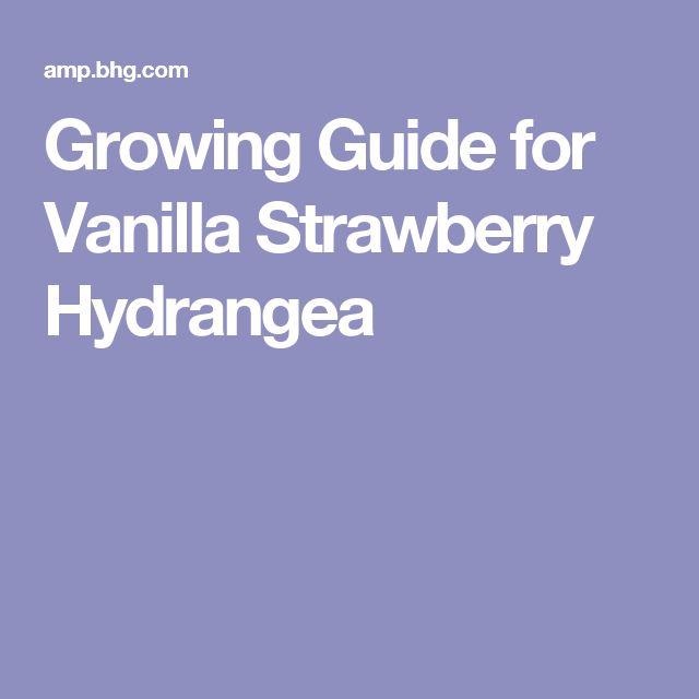 Growing Guide for Vanilla Strawberry Hydrangea
