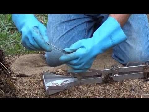 carbure de calcium anti taupe rongeurs pour lampes acétylène et canons anti-corbeaux - ciron - YouTube