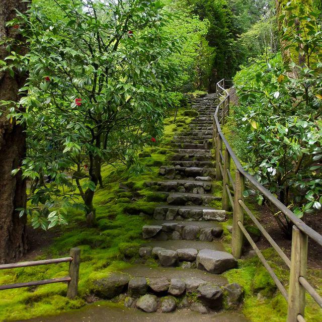 Best 25 Garden Steps Ideas On Pinterest: 25+ Best Steep Backyard Ideas On Pinterest