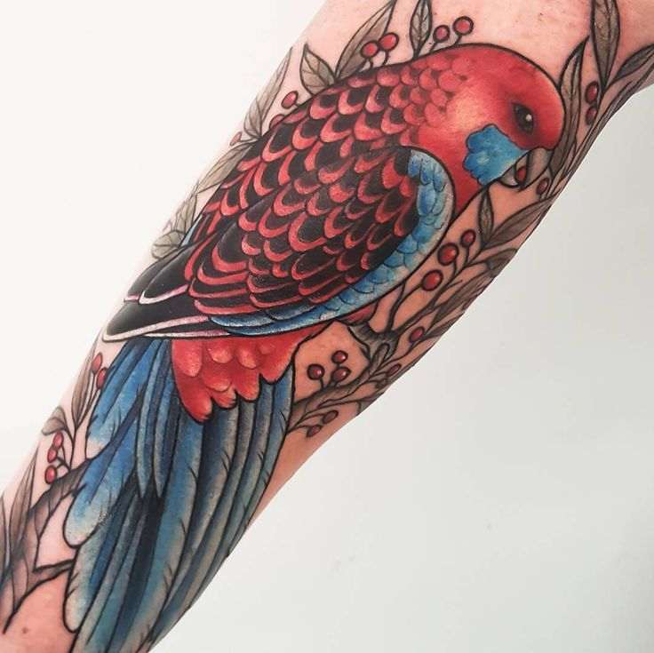 I finally got to tattoo this Crimson Rosella I drew about 2 years ago! Thanks Tegan. So happy to get to tattoo another australian native.   Sorry for repost found a better pic :) #tattoos   #rosella #crimsonrosella #rosellatattoo (at Tattooed Warrior Tattoo Studio)