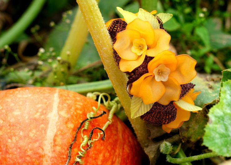 beautiful bracelet like pumpkin flowers! from www.herstorydesign.com