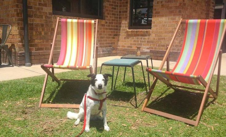 Sydney's Five Best Dog-Friendly Cafes - News - Concrete Playground Sydney
