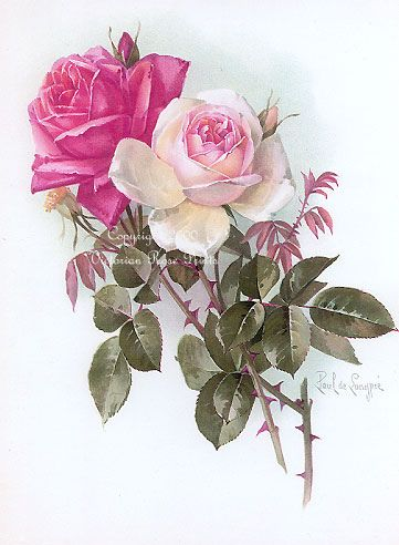 China-Ivory-Red Roses DeLongpre | Flickr - Photo Sharing!