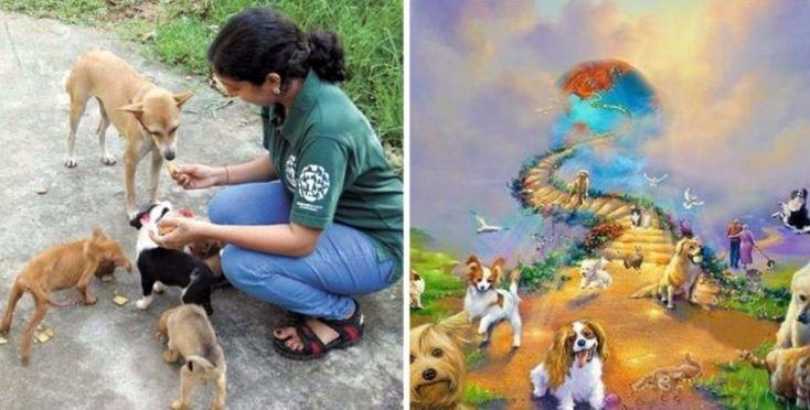Una rescatadora de animales fue recibida al cruzar el Puente del Arco Iris (CARTA): #arcoiris #puentedelarcoiris #perro #perros #carta #animales #animal #mensaje #noticia #noticias #amor #mascota #mascotas #cachorro #cachorros