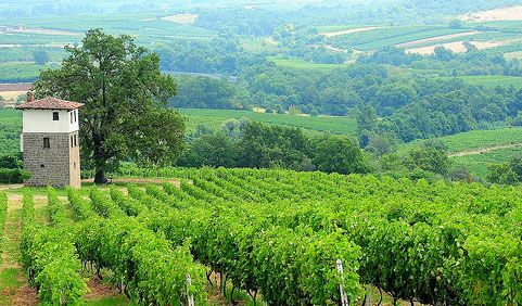 VISIT GREECE| Wine Roads of Macedonia - Naoussa Vineyards - Greece