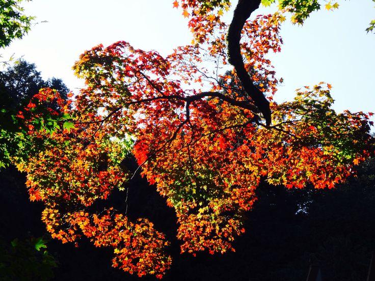 寂光寺 - Jakkoji Temple